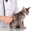 Ветеринарные клиники в Капустином Яре